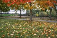 Herbstlaub (bei Wustuben) L1003231.jpg