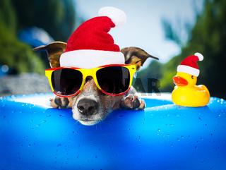 beach dog at christmas