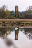 Observation tower in a nature reserve with reflection in a lake and a sleeping swan