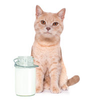 hungry cat kittebn  with milk bottle