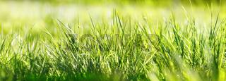 gras wiese natur sonne banner
