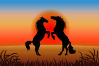 Romantic horse background - two stallions reared against the sunset