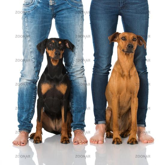 Dogs between legs