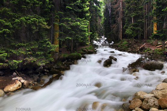 Forest landscape and mountain river  in the vicinity of Dombay, Russia