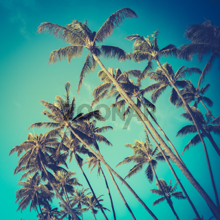 Retro Diagonal Palm Trees In Hawaii