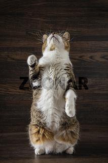 Cat standing up