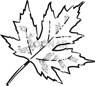 Thanksgiving Day in United States of America, Canada. maple leaves. Style of engraving