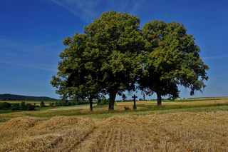Wegkreuz unter einer Baumgruppe mit Getreidefeld