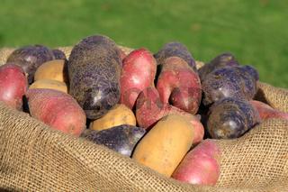 Die Artenvielfalt der Kartoffel