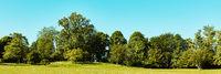 Grüner Park mit Wiese und Bäumen als Panorama Header