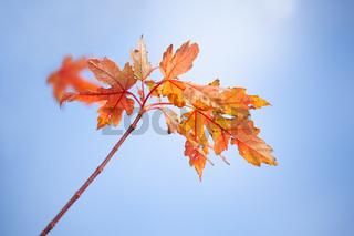 Autumns colourful decay into winter hibernation