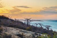 Baobab tree on sunset against bay of water Madagascar