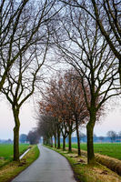 Country Road between the trees and fields