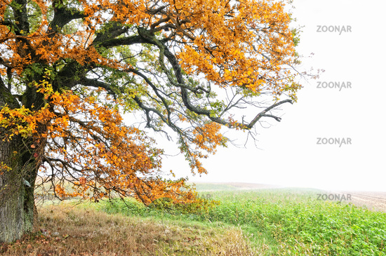Autumn in the woods and fields