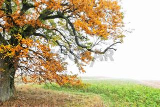 der Herbst im Wald und Flur