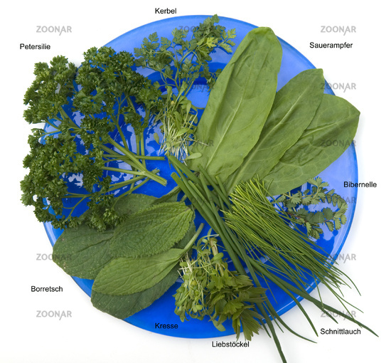 Herbs for Frankfurt's green sauce