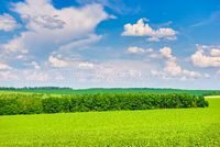 Trees on green field