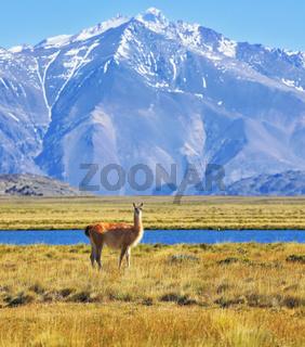 Patagonia, Perito Moreno National Park