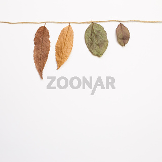 Autumn dry leaves hanging on a string with white background. flat lay, top view, copy space