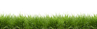 Fresh green grass isolated - banner - Panorama