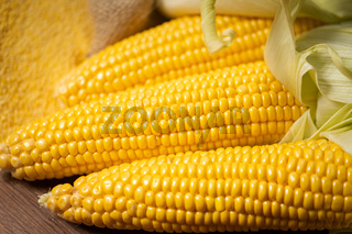 Ripe young sweet corn cob close up