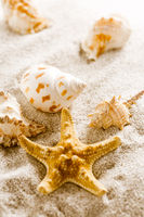 Assortment of natural seashells on sand. Concept of holiday