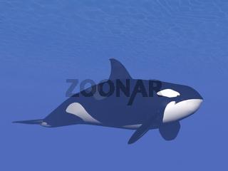Killer whale underwater - 3D render
