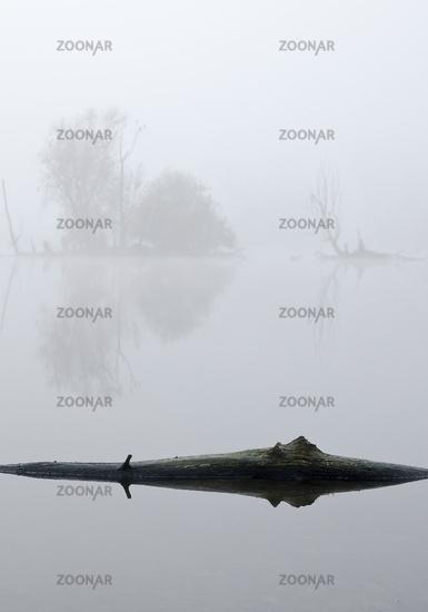 Tree stump in the water, November fog, Bislicher Insel nature reserve, Xanten, Germany, Europe