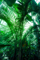 Jungle rainforest background