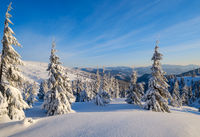 Sunrise mountain skiing freeride slopes and fir tree groves near alpine resort.