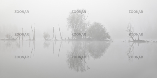 Islands of dying trees in the water in the November fog, Bislicher Insel, Xanten, Germany, Europe