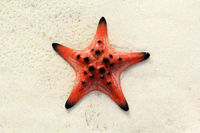 Summer Beach Starfish And Tropical Sea Background