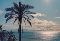 Idyllic scenery tropical landscape silhouette of lush palm tree leaves glowing sun over shiny calm smooth Mediterranean Sea waters. Beach at Benalmádena spanish resort town, Málaga, Andalusia, Spain