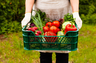 Set of wonderful vegetables grown in ecological conditions