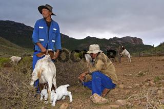 Zwei Nama Ziegenhirten lassen junge Burenziegen zum Säugen an das Muttertier