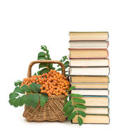 books and wicker basket with red rowan berries on a white background