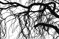 Tree branches silhouettes