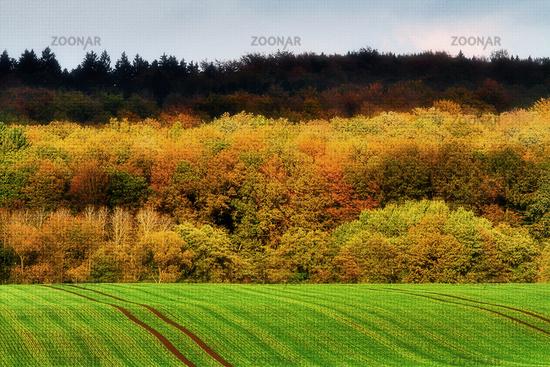 Reinhardswald in autumn