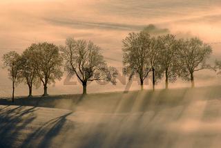 Nebelstimmung auf der Schwaebischen Alb