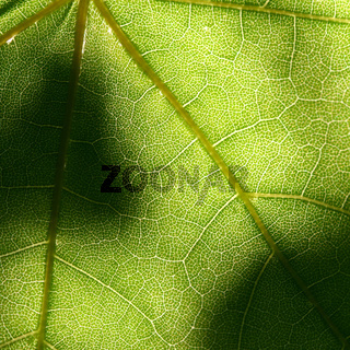 green leaf beautiful nature background