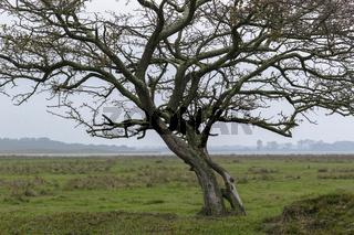 Ruegen - Baum auf Ummanz