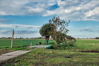 Bicycle track with pollard willows in Dutch countryside