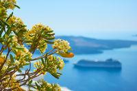Flowers on the coast of Santorini