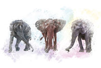 Watercolor Elephants. Digital illustration on white background.