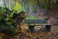 Rest area on the forest path with a wooden bench