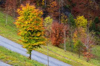 Alpine autumn  road view