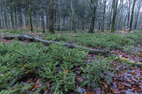 Dead, fallen trees create space for new life on the forest floor