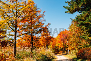 Seoul forest park, Autumn colorful trees road in Korea