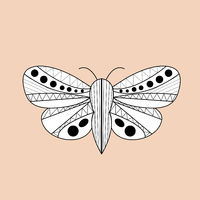 Night moth butterfly Hand drawn, doodle, sketch line style .Ethnic esoteric zentagling wings. Vector illustration