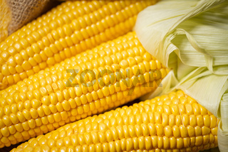 Ripe young sweet corn cob close upt